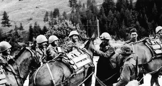 Artylerzyści Alpini przygotowują muły do transportu dział górskich i innego wyposażenia.