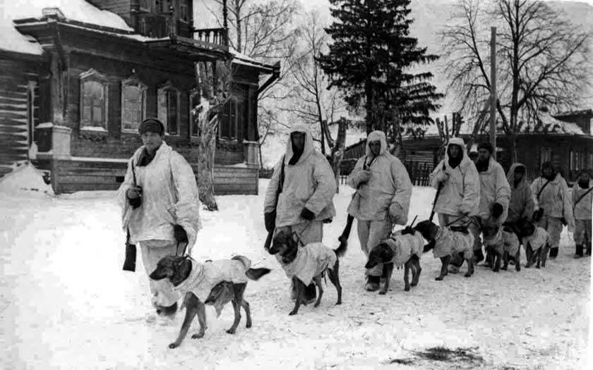 Czerwonoarmiści z psami przeciwpancernymi (niszczycielami czołgów); grudzień 1941 r.